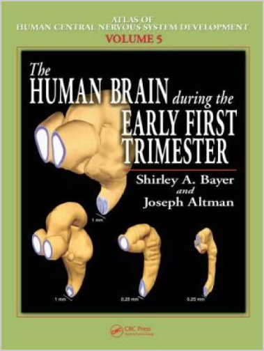 The Human Brain During the Early First Trimester 1st Edition Pdf Free Download