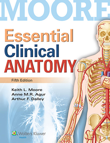 Moore's Essential Clinical Anatomy 5th Edition Pdf Free Download
